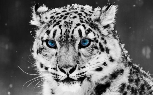 10 fonds d cran aux couleurs de l hiver et de no l for Fond ecran hiver animaux